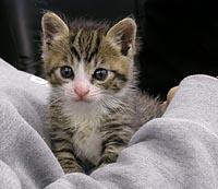01_cat4.jpg